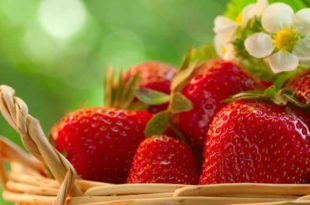 fragole_web